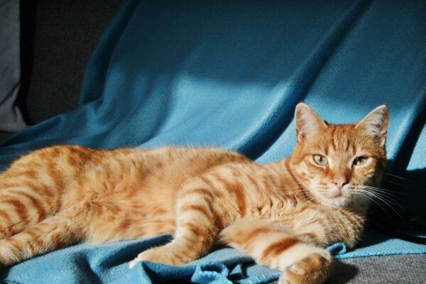 14 Most Common Weird Cat Behaviors Finally Explained