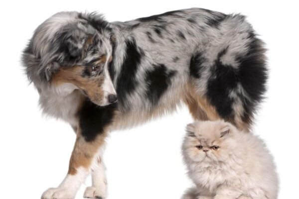 How to Introduce a Cat to a Dog Successfully in 5 Easy Steps